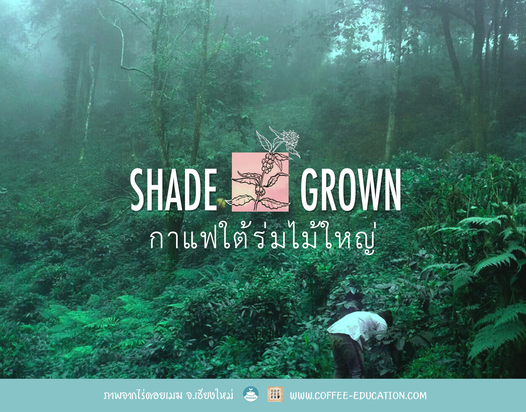 Shade-Grown